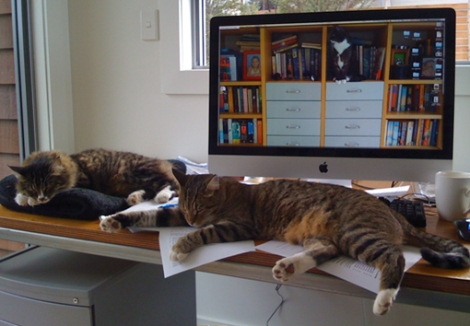 kitties-on-desk-small